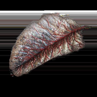 Leaf of the Bleeding Tree